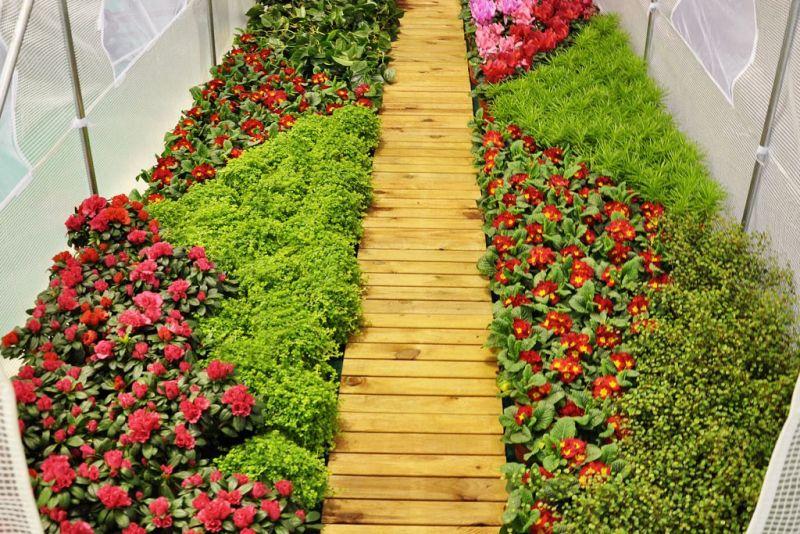 5 zasad uprawy warzyw w szklarni ogrodowej