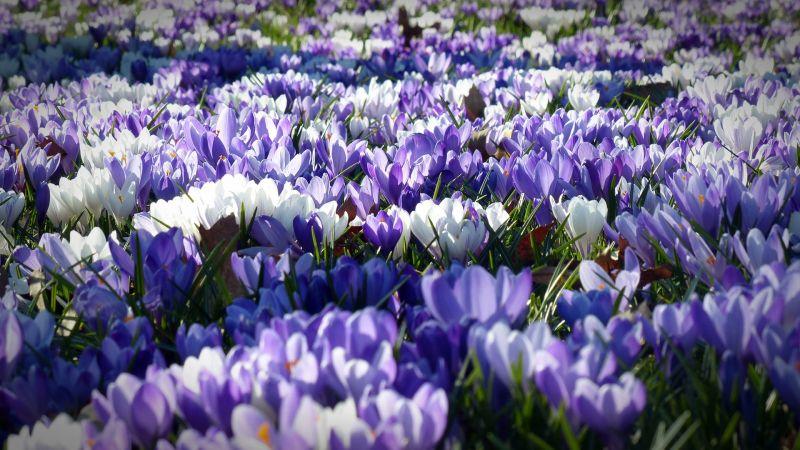 Wiosna w ogrodzie - co musisz zrobić?