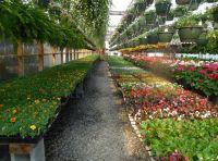 Szklarnia - foliownik do każdego ogrodu