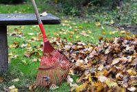 Co musisz zrobić dla swojego ogrodu przed zimą?