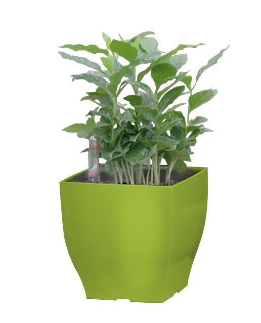 Samopodlewająca Się Doniczka G21 Cube Mini Green Zielone 13